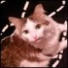 my kitty Julie Pie!