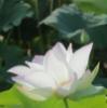 chasoba userpic