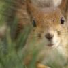 mini_squirrel userpic