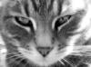 volgographer userpic