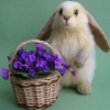 bunny and basket