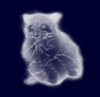 amazing raccoon patronus