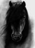 ravenhorsy