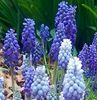cairistiona7: Spring flowers