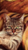 June K. Silverman: cat with glasses - small