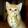 Мишка Квакин: кот поражен крупно