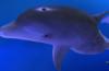 delfinchik
