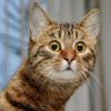 кот удивлён