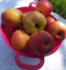 дача, яблоки, отдых, дома