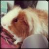 piggington userpic
