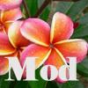plumeria_mod [userpic]