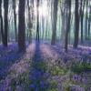 lavenderfieldss userpic