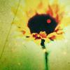 shalowater: yellow:sunflowerdot