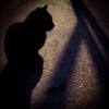 catt_ford