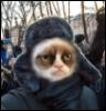 Ушанка кот
