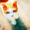 annhem userpic