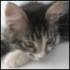 cat_ecat userpic