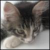 cat_ecat