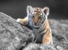 tigrenok2015 userpic