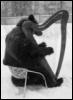 медведь  с арфой