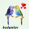 budgieluv [userpic]
