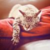 Sleeping, Sleepy, Kitty of the lord