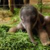 Baby elephant, Cute