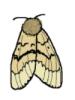 dithka userpic