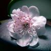 oil_lamp userpic