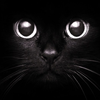 OB_supporter: Black cat