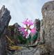 каменный цветок, олег, цветок на камне, kukka kivella, лиинахамари