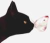 gatto_nera userpic