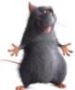 крысёныш