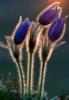 lomelin userpic