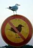 плевать на запреты