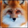 fox_blog userpic