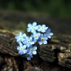 forget_me_not20 userpic