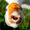 ducks_are_great userpic