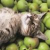 кіт в яблуках