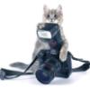 cat_camera