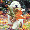 autumn puppy