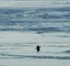 penguinconquist