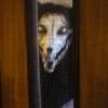 dead_little_cat userpic