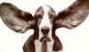 dream_dog userpic