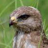 chuvashia_birds