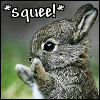 casey: bunny squee