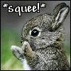 casey: bunny squee