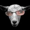bonnie goat
