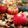 seasonal • autumn