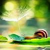Beth: misc - snail